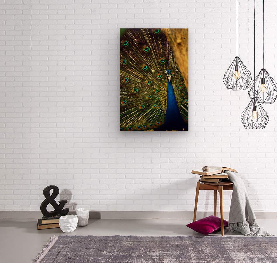 blue and green peafowl  Wood print