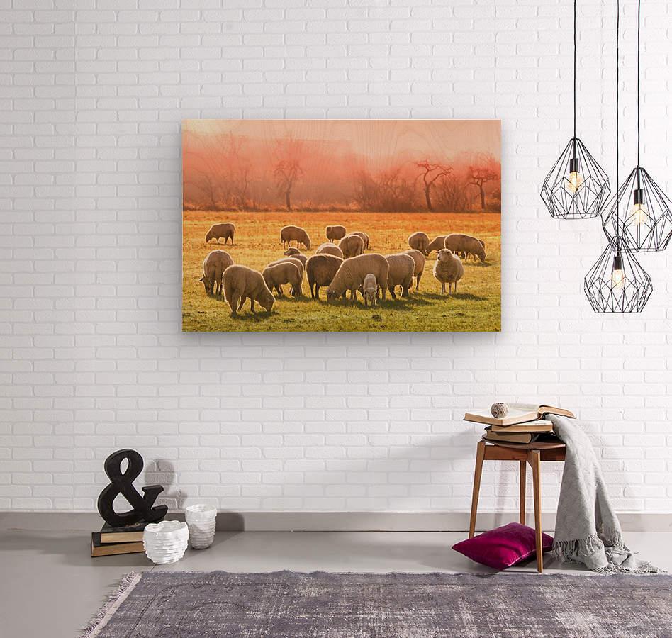 animal sheep flock of sheep meadow  Wood print