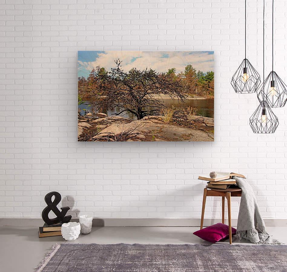The Pine Tree I  Wood print