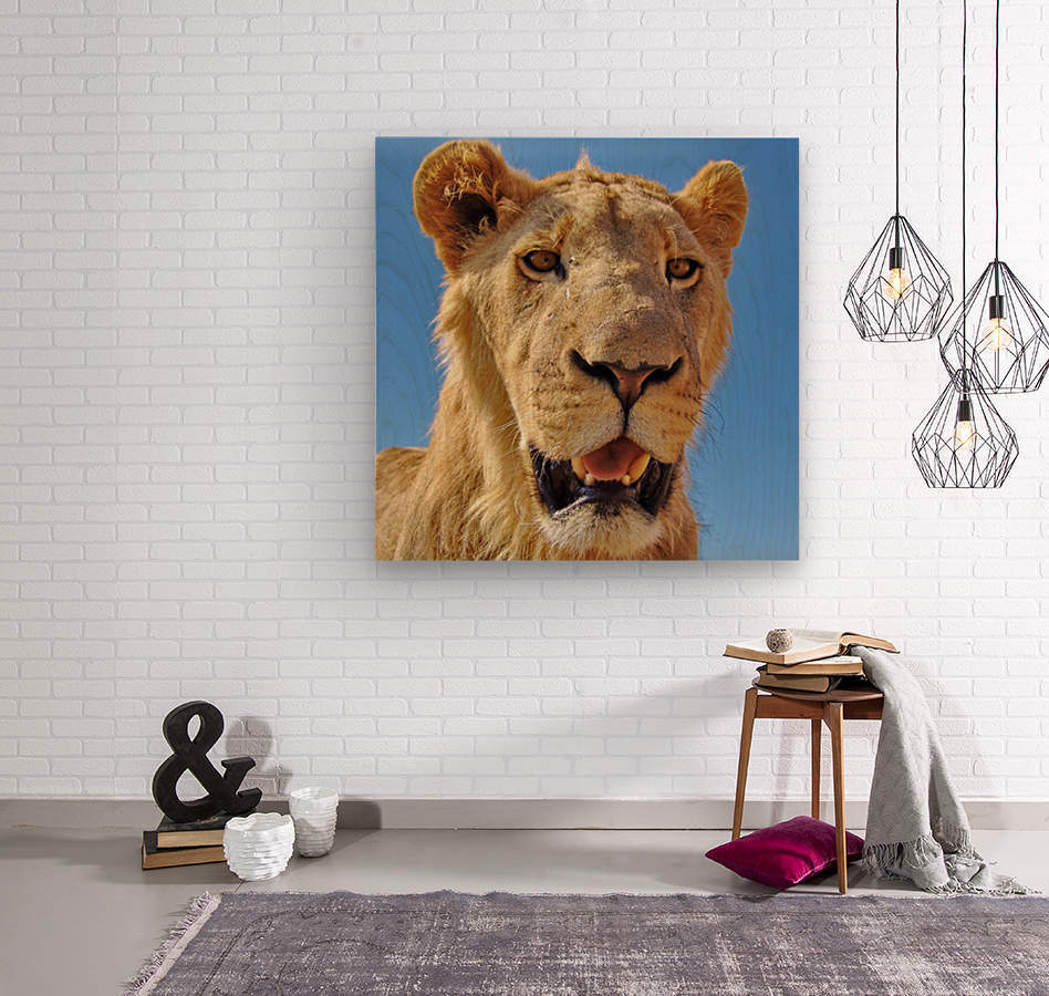 Lion close up square  Wood print