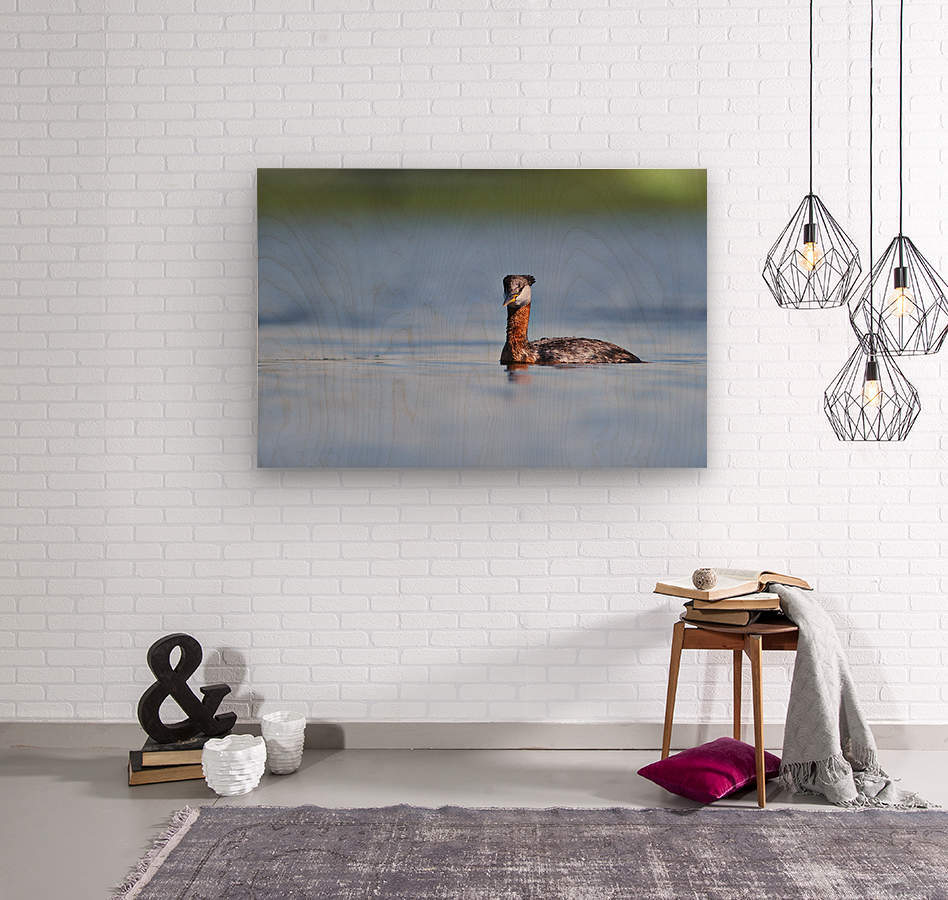 RED NECKED GREBE  Wood print