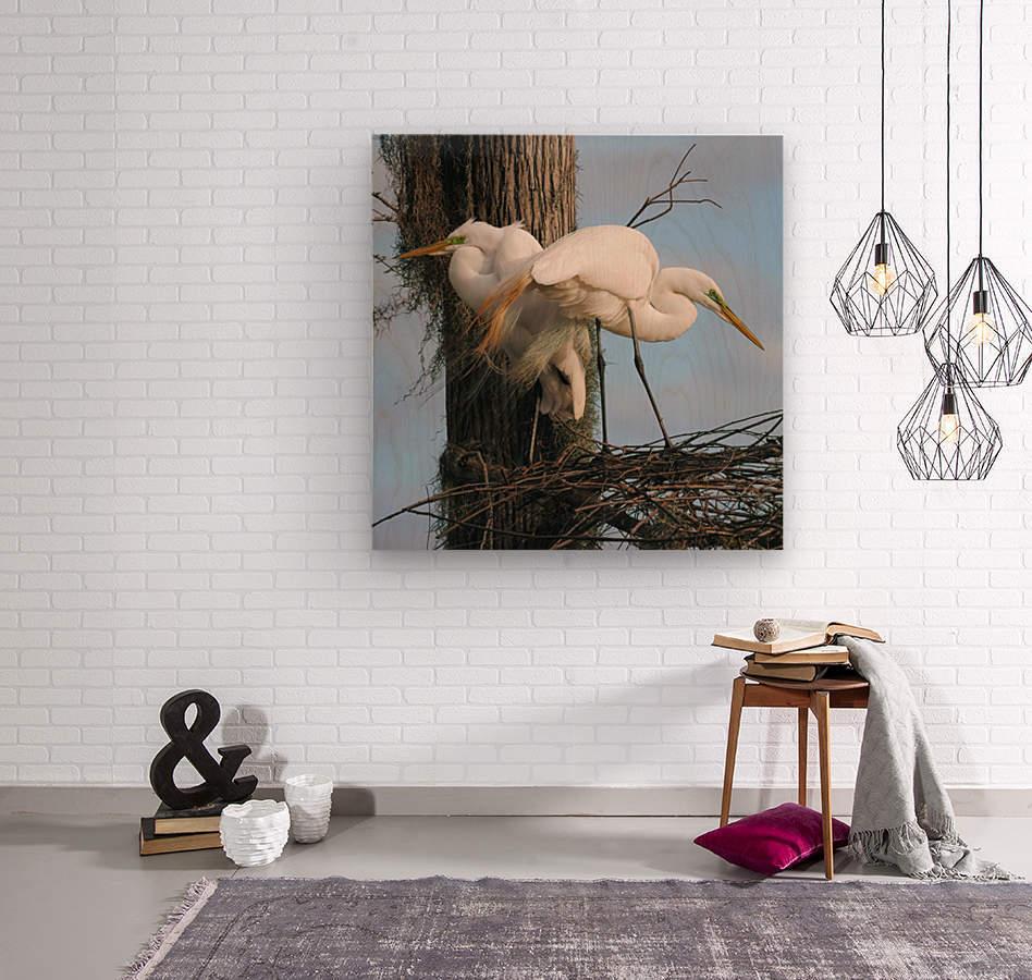 Mating Season - Great Egrets I  Wood print