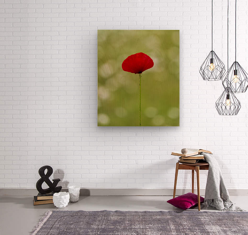 A solo Red Poppy  Wood print
