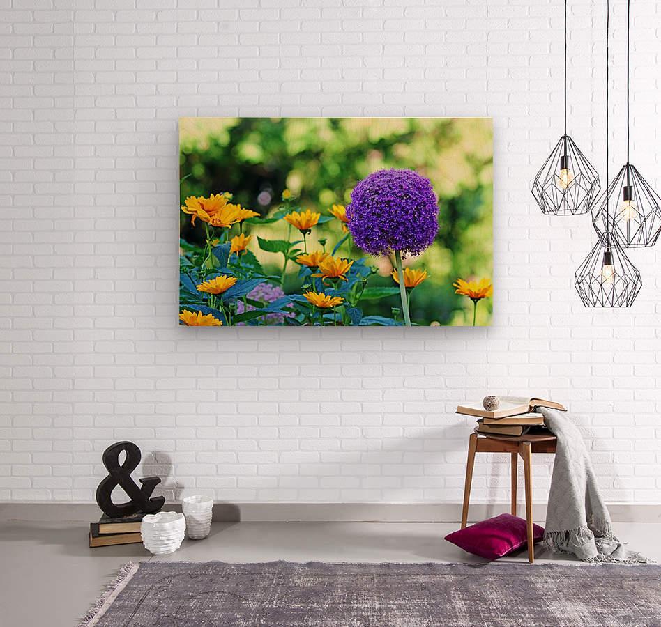 Allium And Wild Sunflowers  Wood print