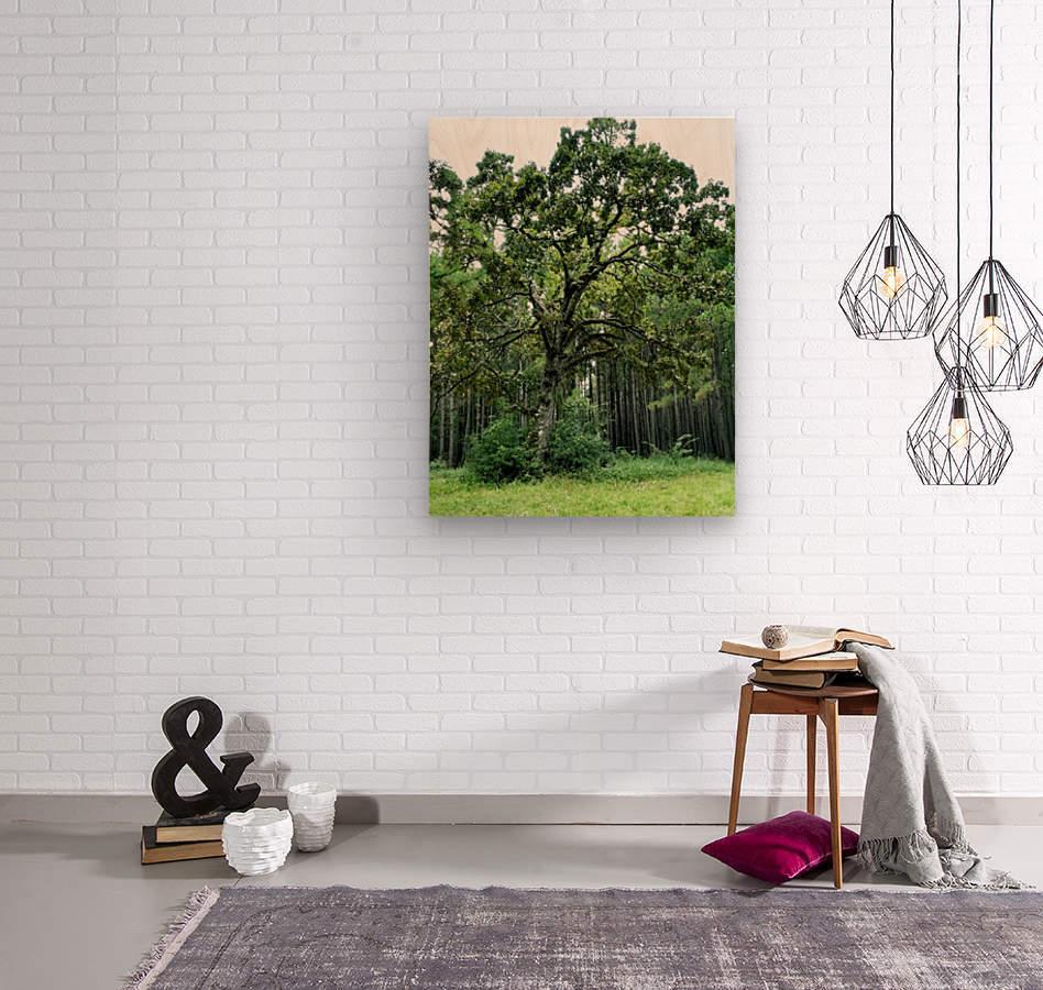 Larrys Tree  Wood print