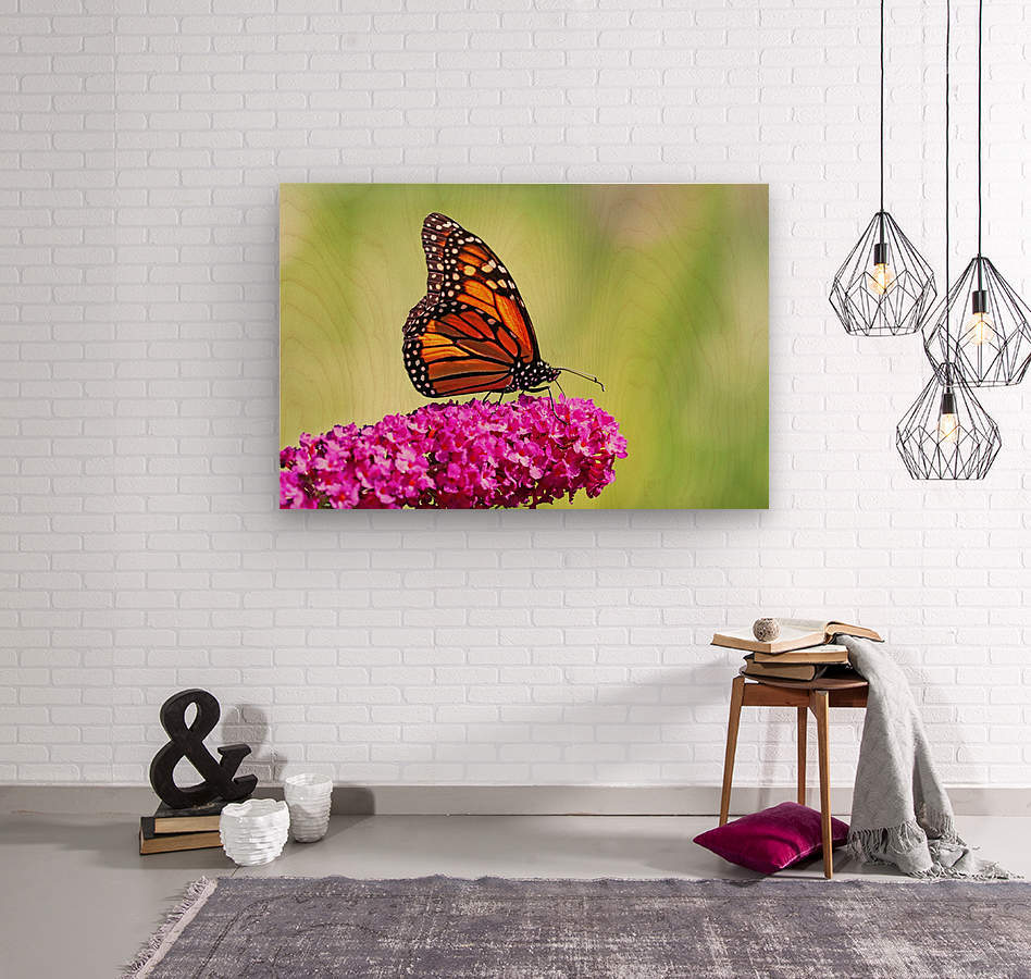 Monarch On Magenta Buddleia  Wood print
