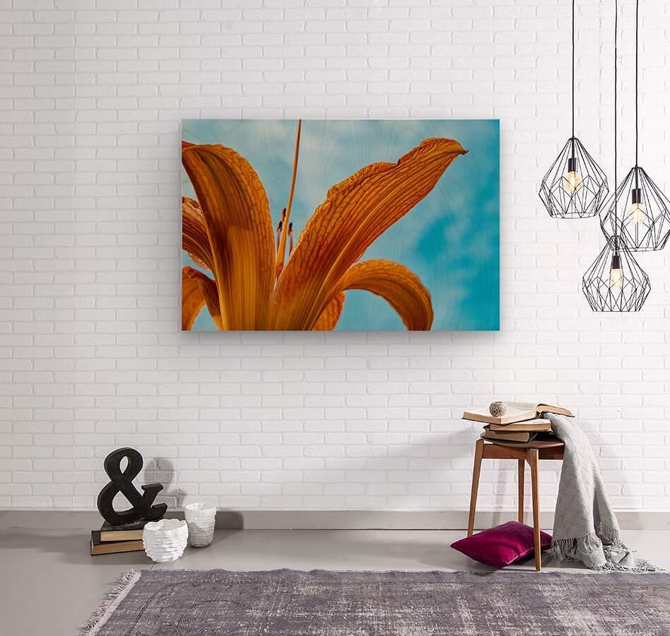 Orange Iris 3  Wood print