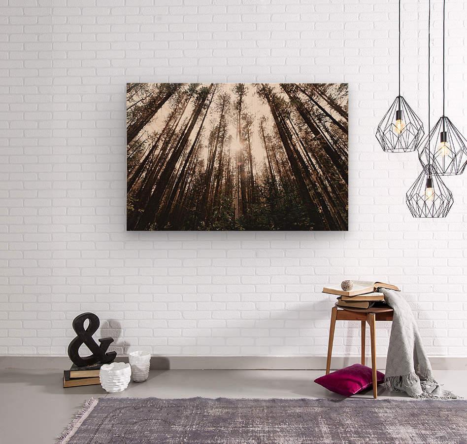 See the Sun  Wood print