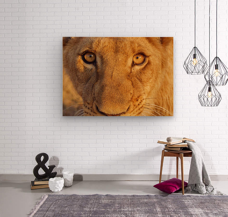 Lion Eyes   Wood print