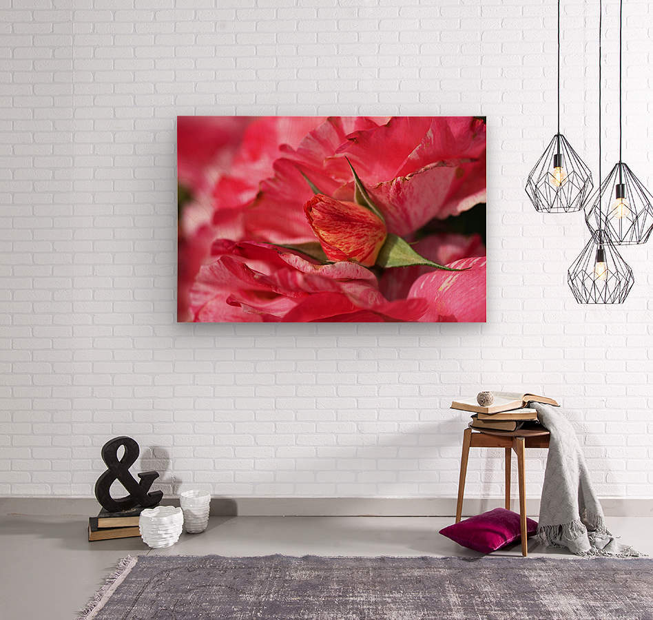 Rose Bud On My Petals  Wood print