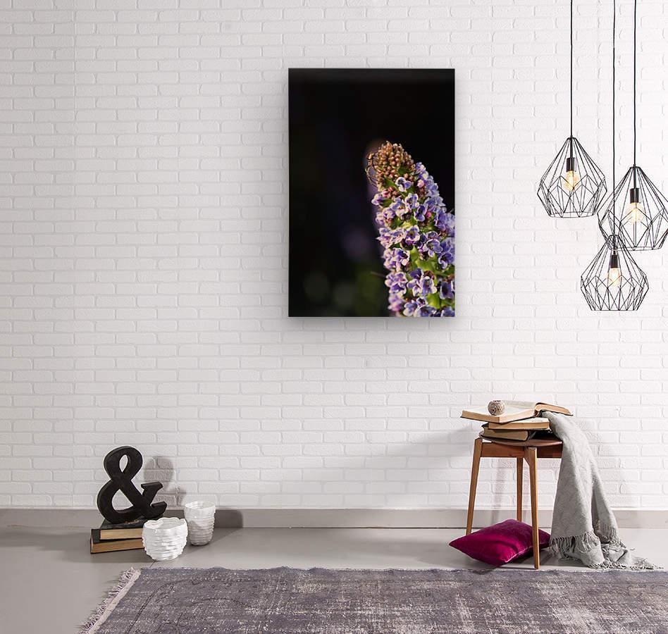 Veronica Flower Delight  Wood print