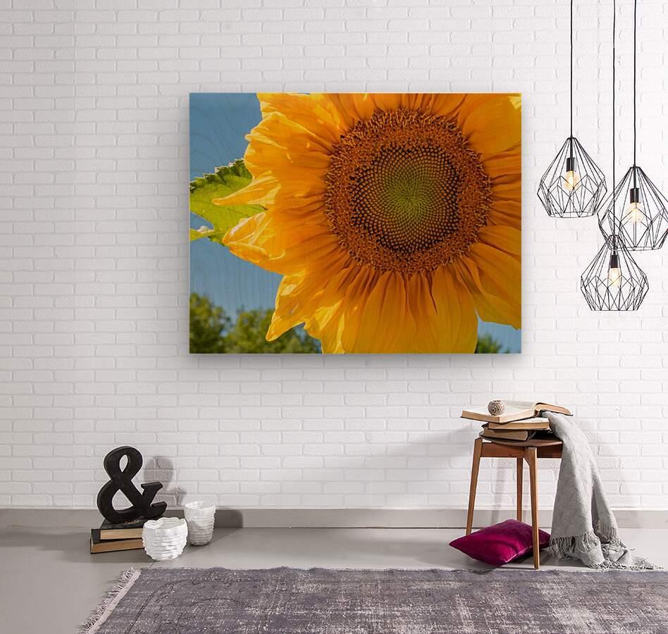 Sunflower 10  Wood print