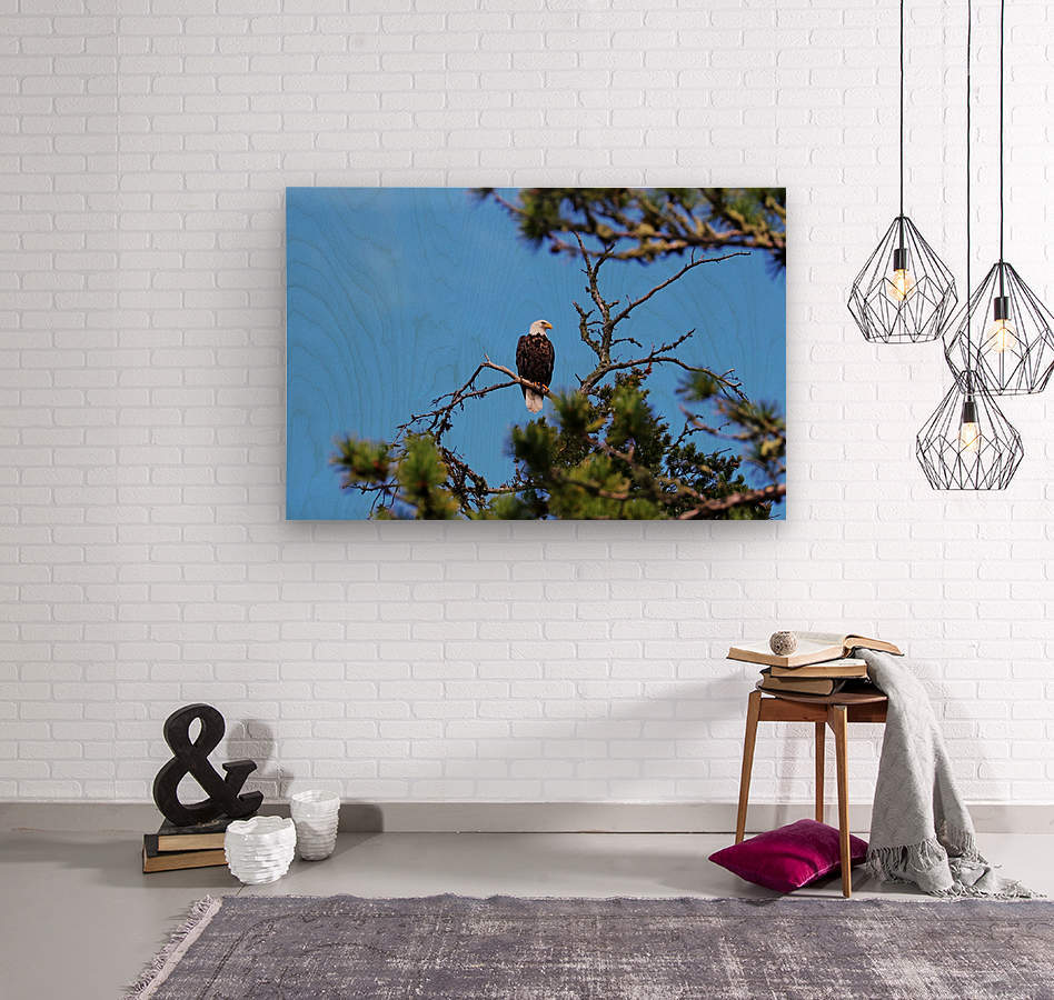 Bald Eagle Looking Regal  Wood print