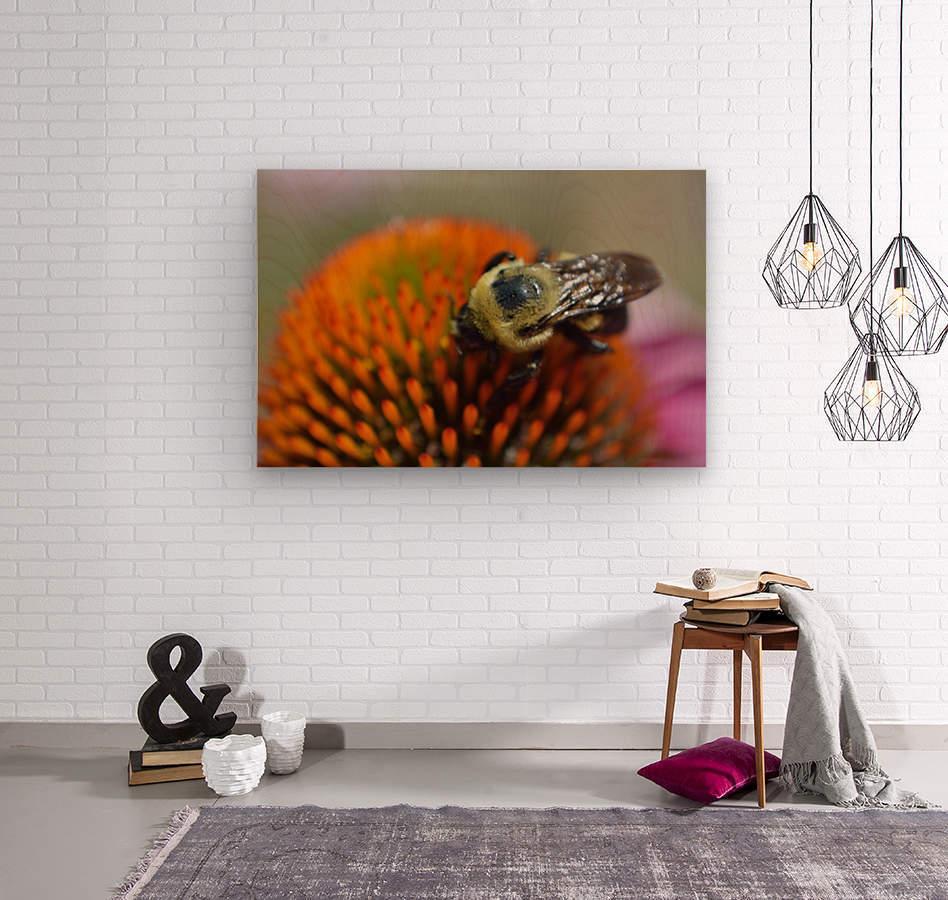Purple Coneflower with bee  Wood print