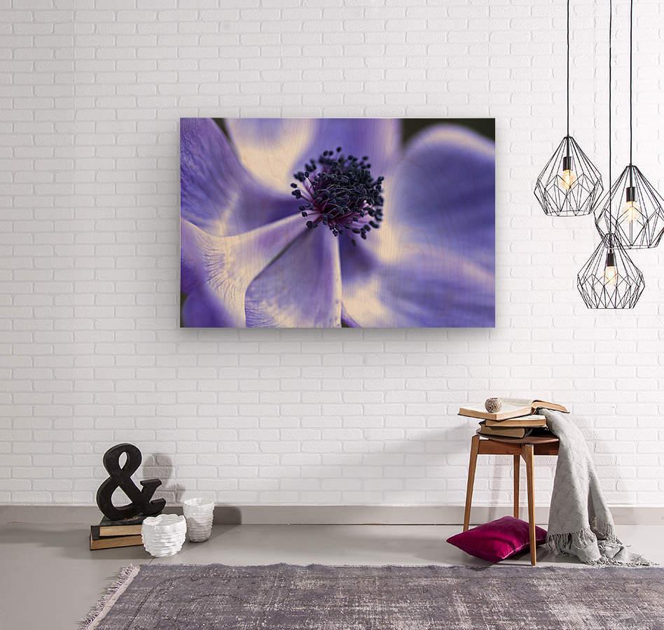 Blue Anemone  Wood print
