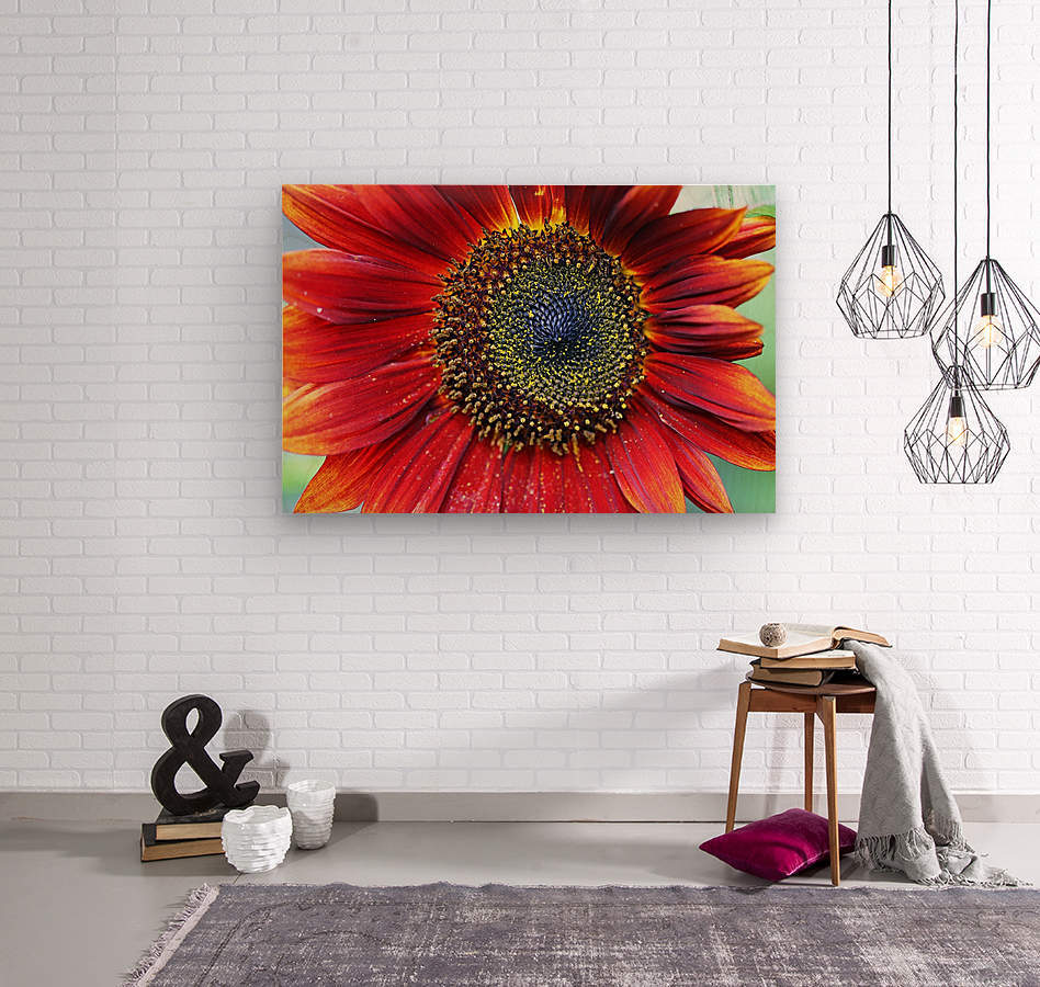Red Sunflower With Yellow Tips  Wood print