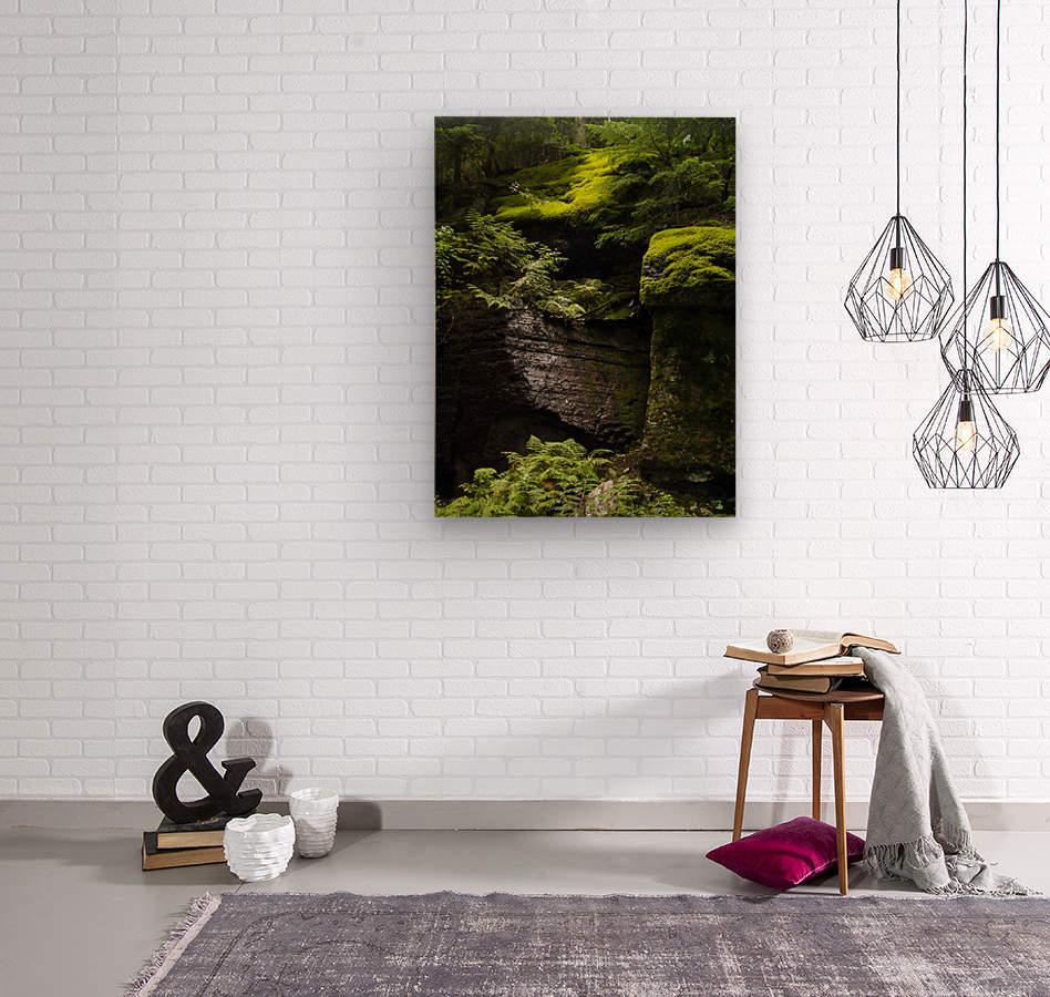 Trail of the Cedars  Wood print