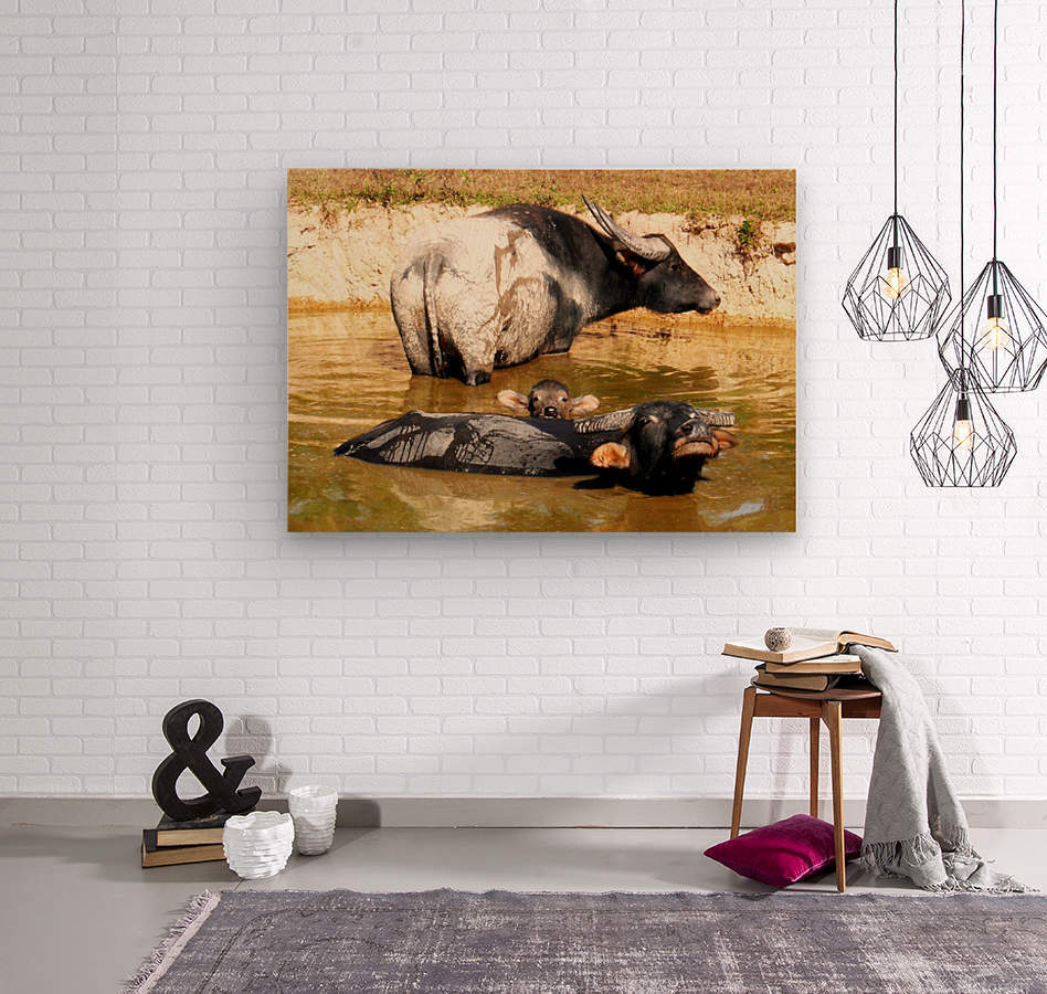 Water Buffalo Family Portrait  Wood print