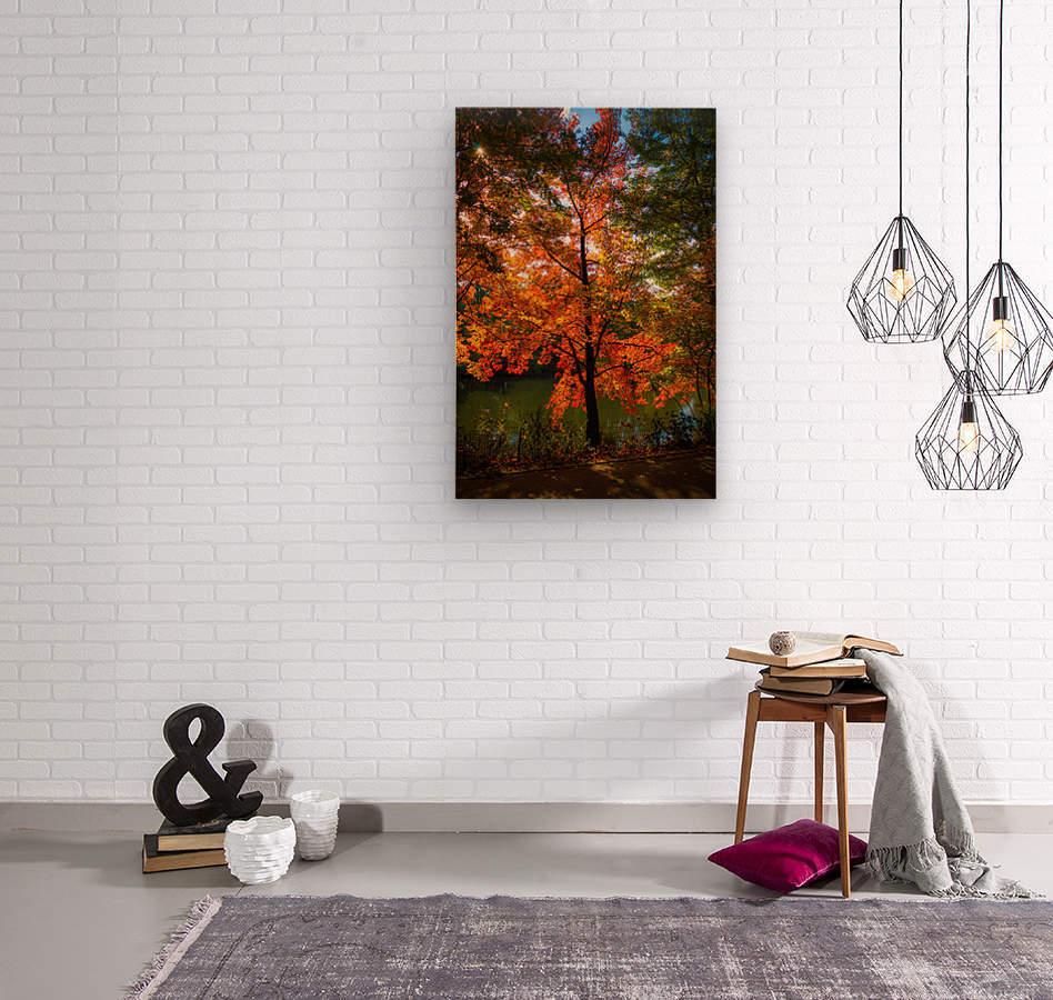 A fall colors tree  Impression sur bois