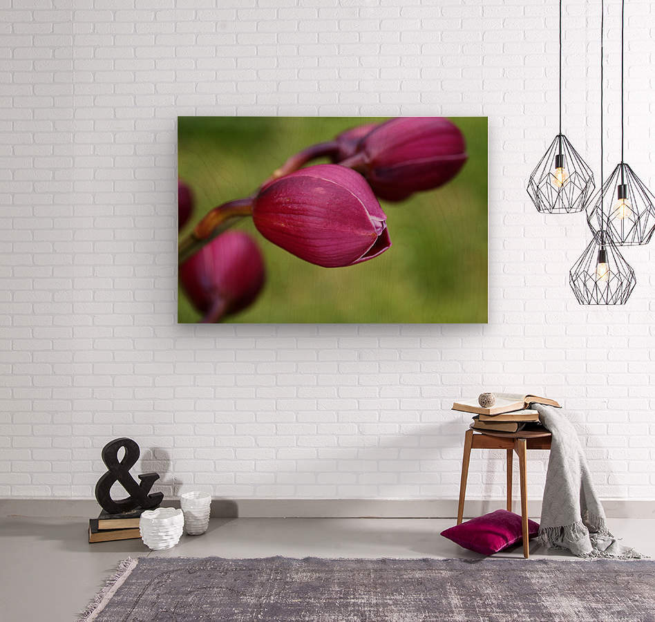 Rich Pink Orchid Buds  Wood print