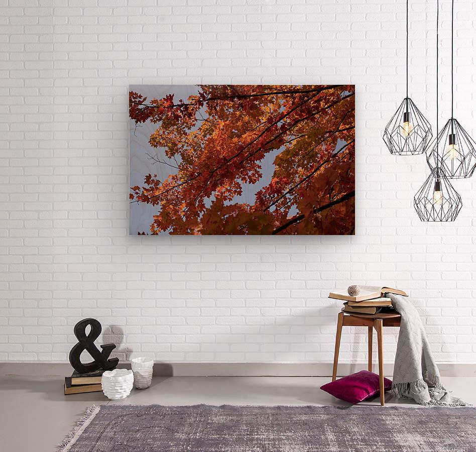 Autumn tree  Wood print