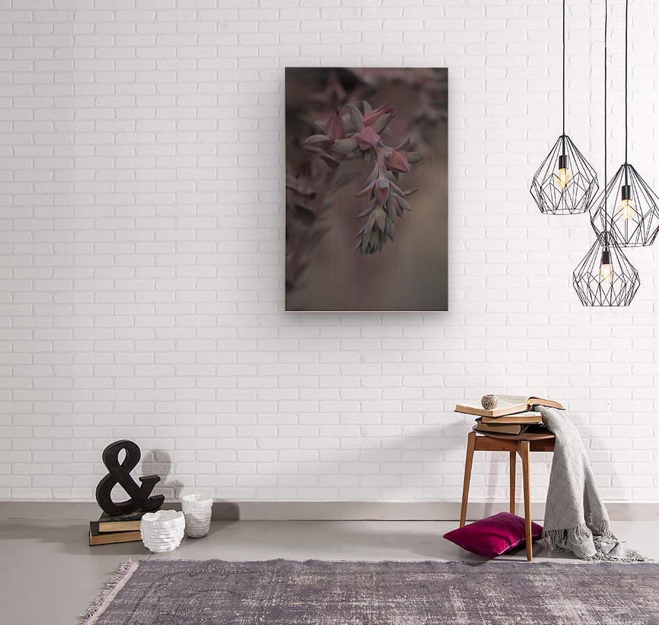 houseleek  Wood print