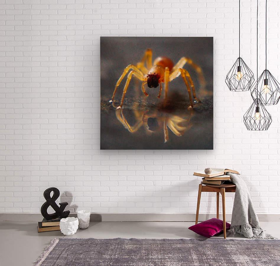 Spider reflecting  Wood print