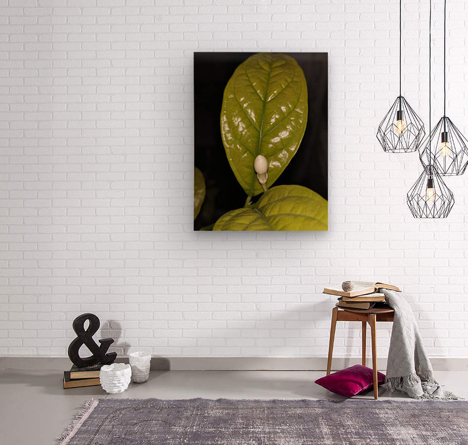 Jasmine Flower Fragrance  Wood print