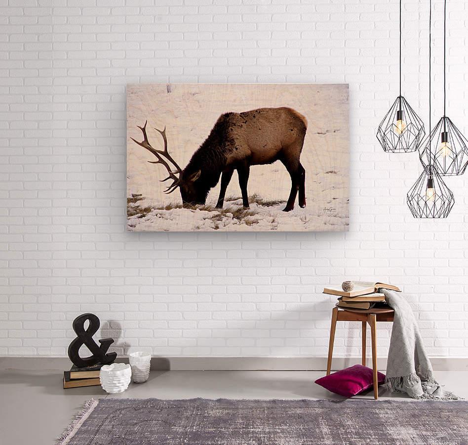 Elk in Wyoming  Wood print