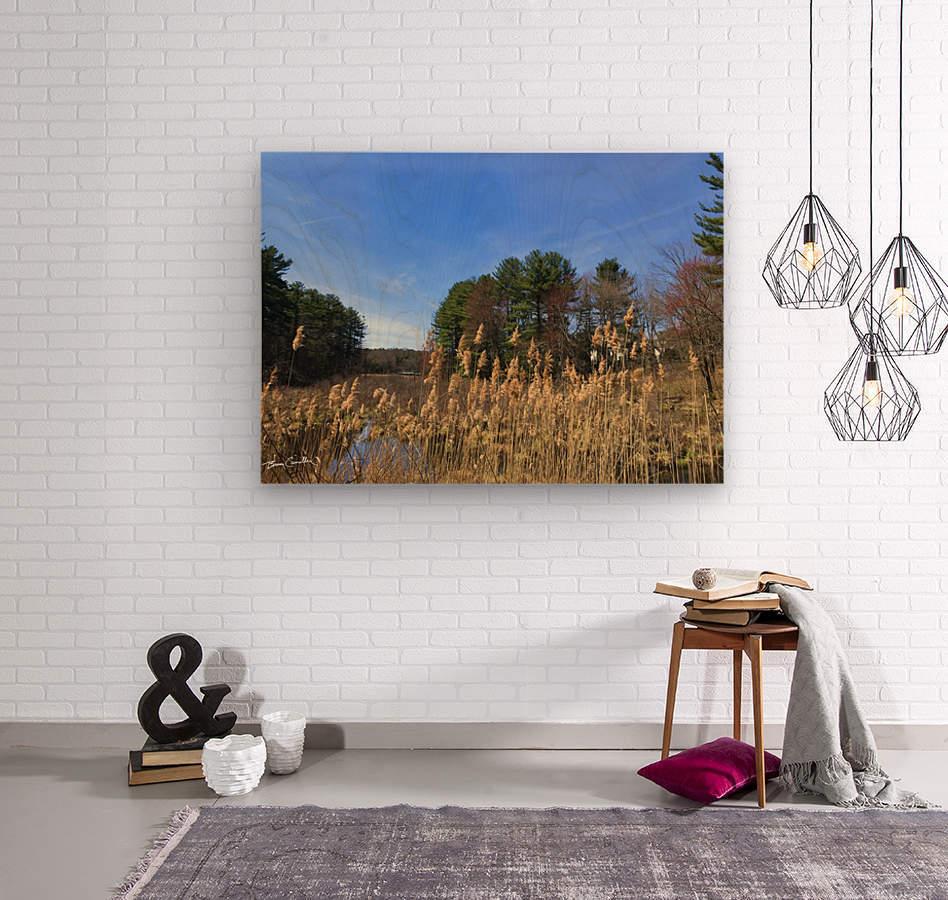Simsbury Wetland  Wood print