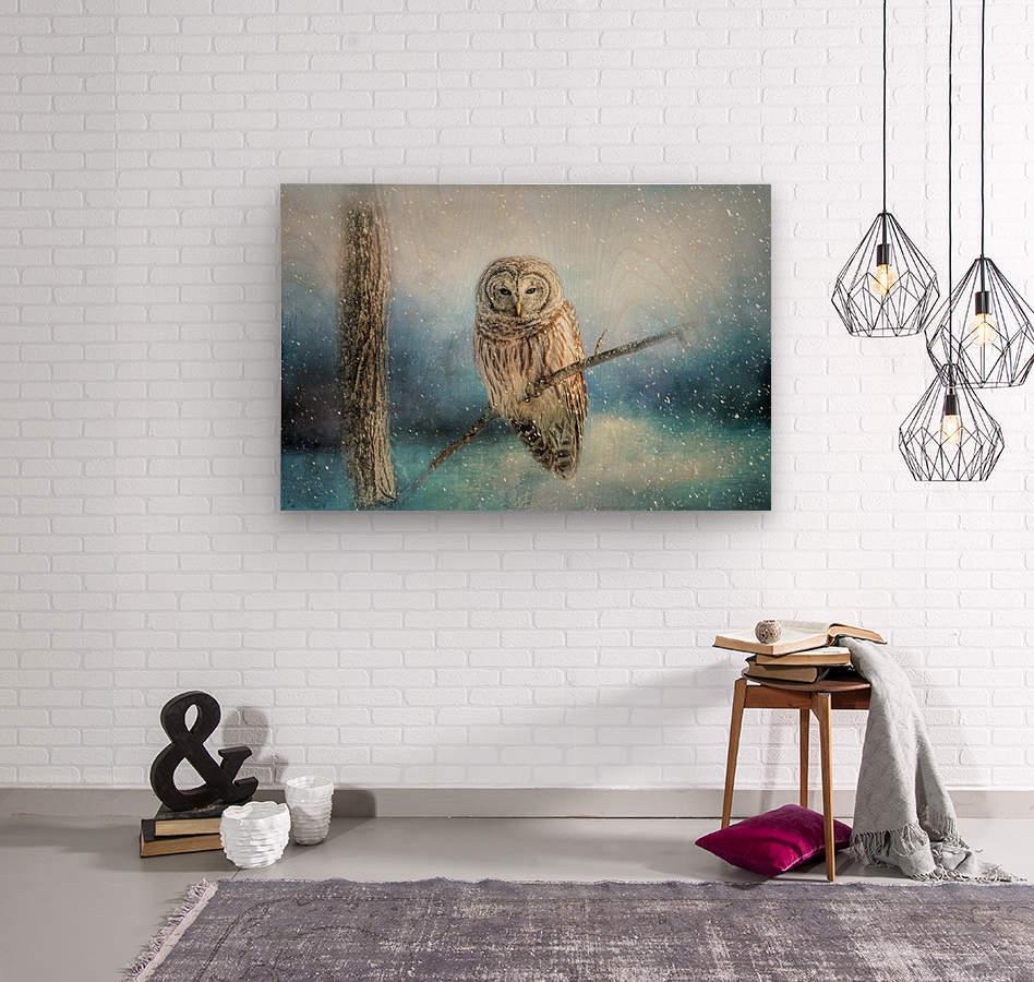 Barred Owl Solitude  Wood print