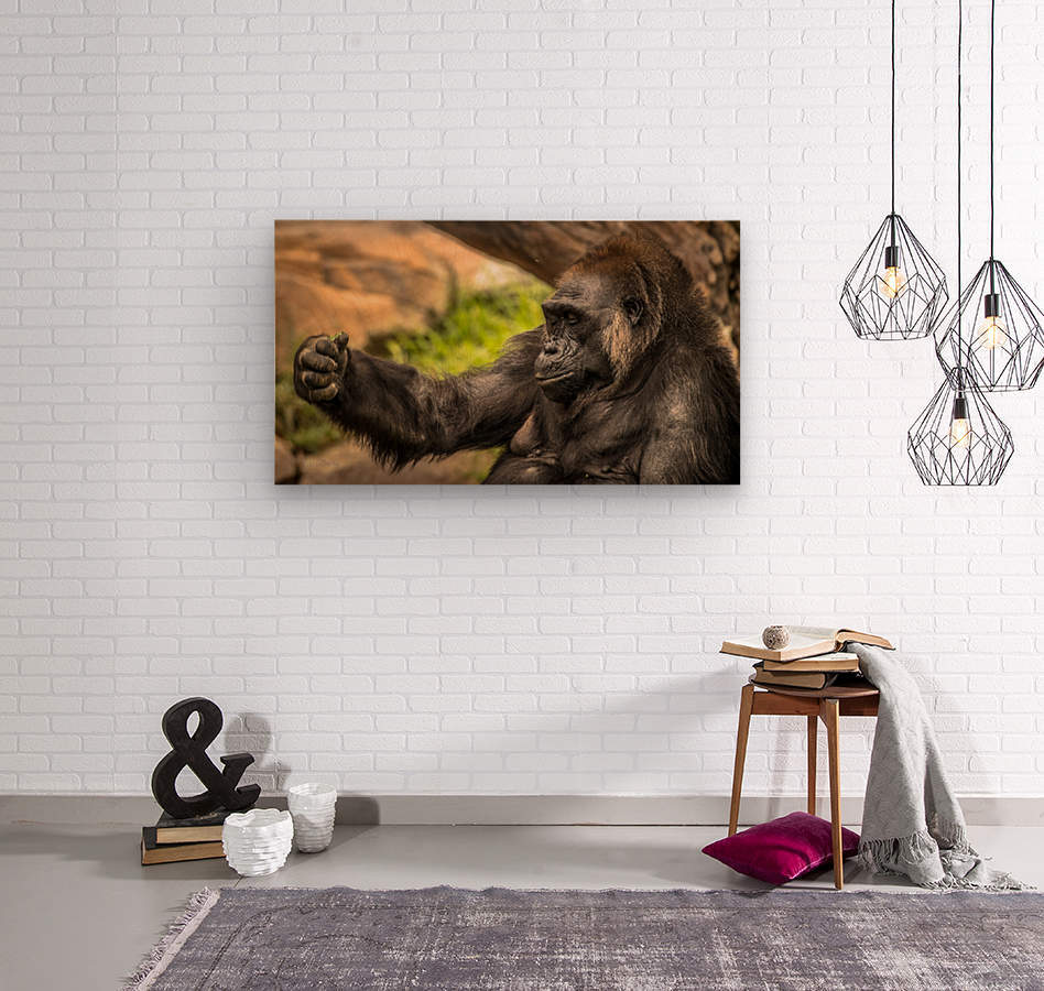 Quiet Gorilla Sleeping  Wood print