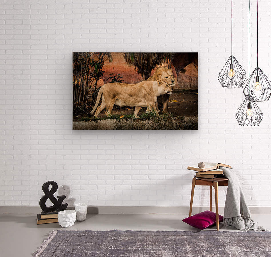 The Loving Lion Couple  Wood print
