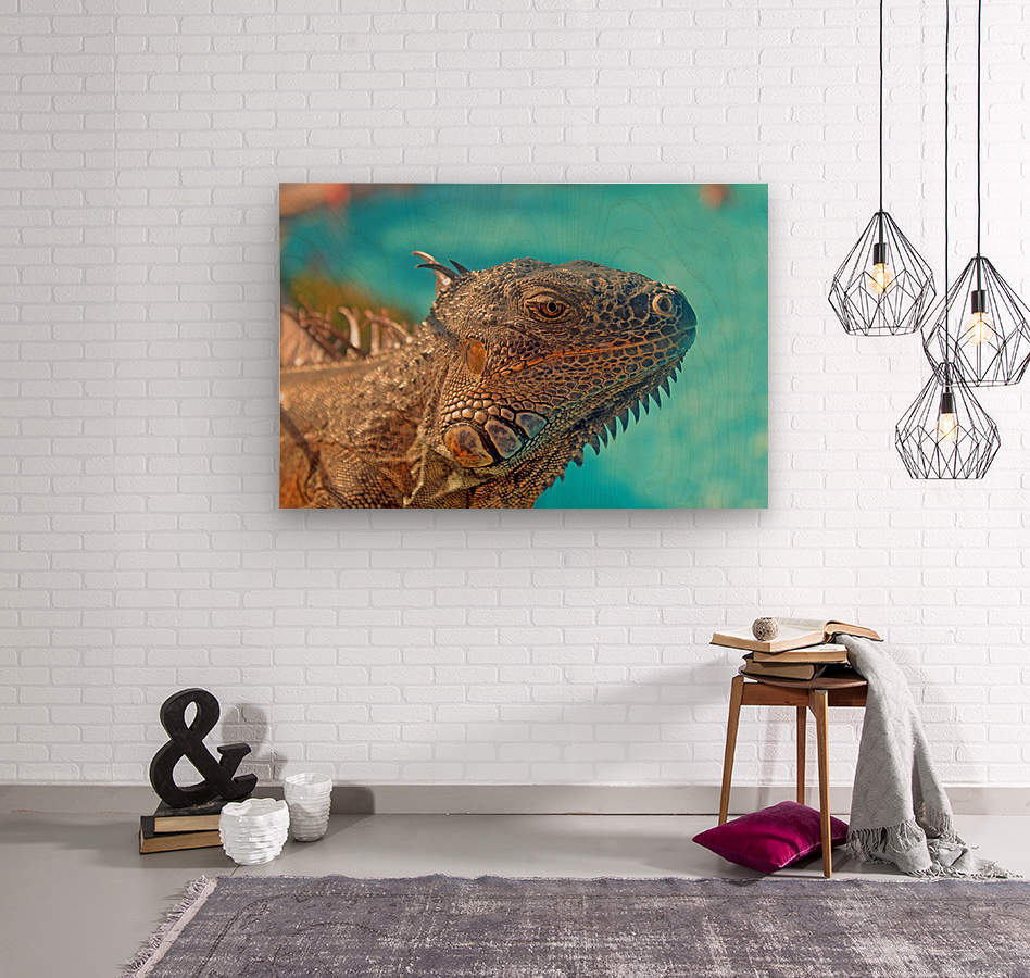 Spiny-Tailed Iguana  Wood print