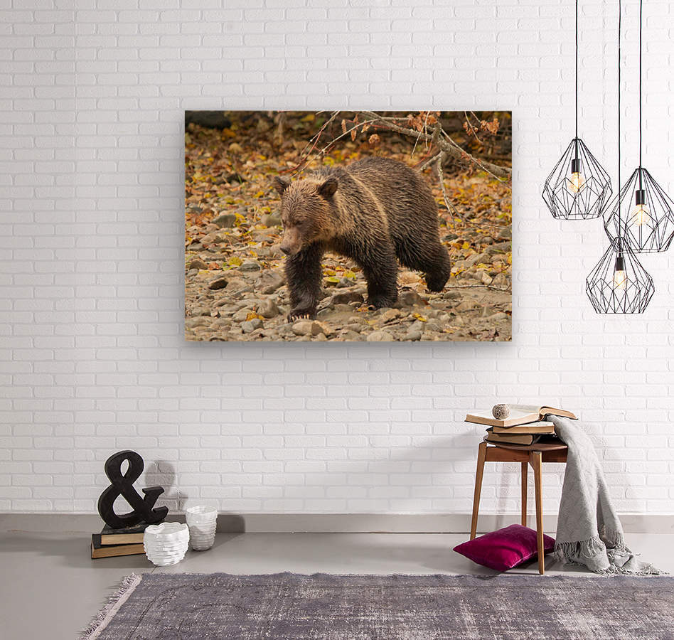 Grizzly Youngster  Wood print