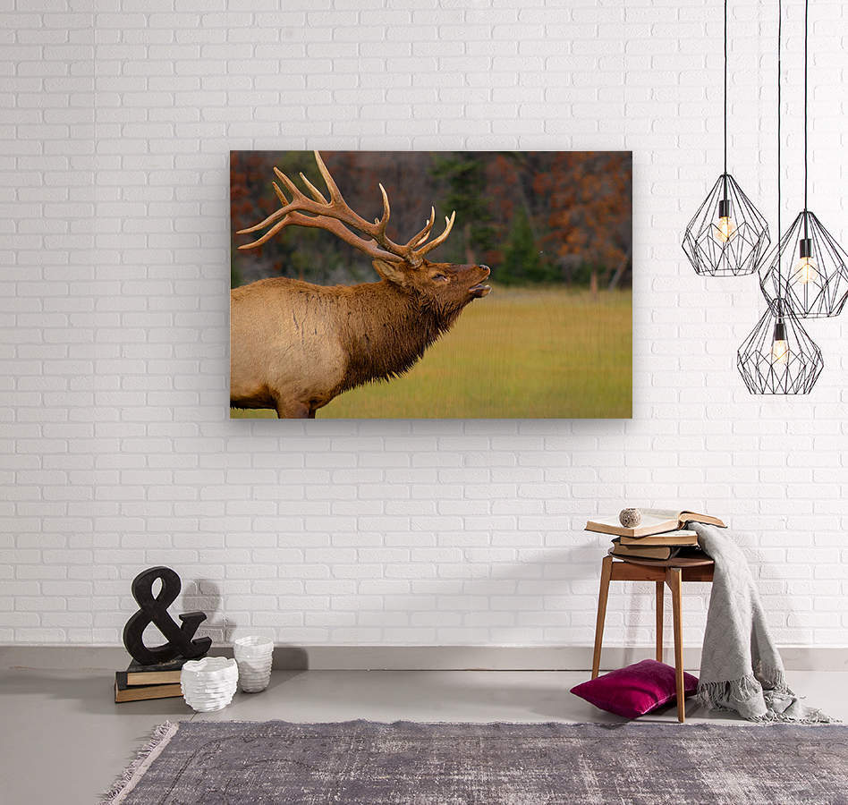 Call of the Wild  Wood print