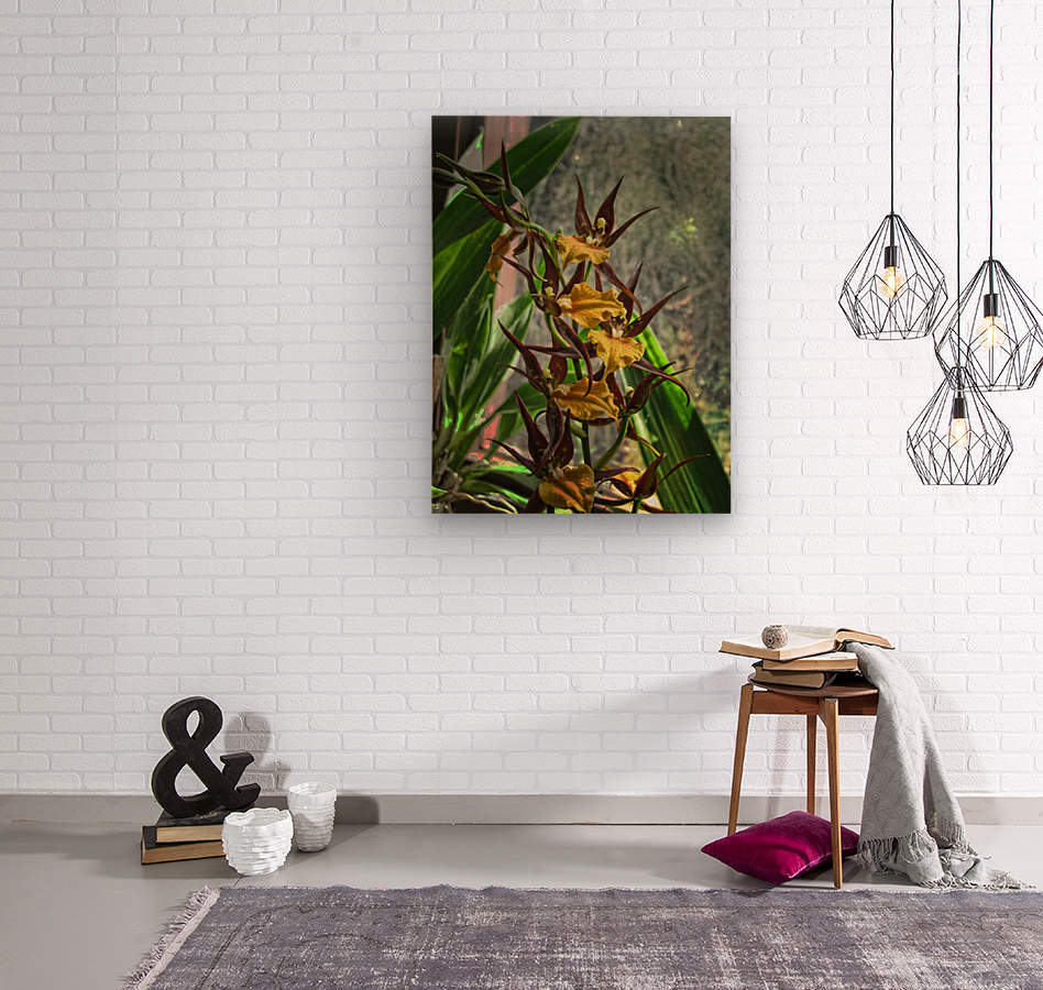 Hawaiian Orchids   Wood print