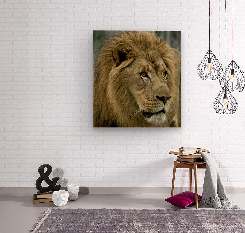 Extreme close up Lion  Wood print