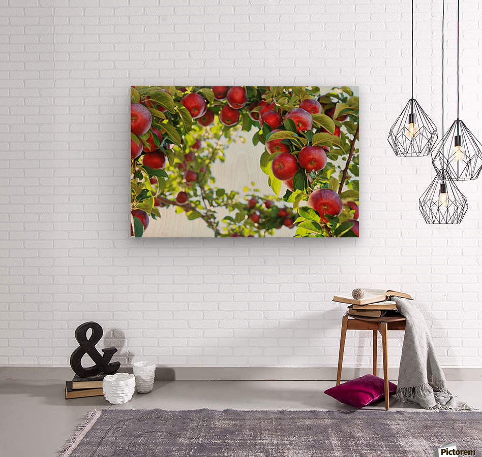 Apples Orchard- Harvest  Wood print