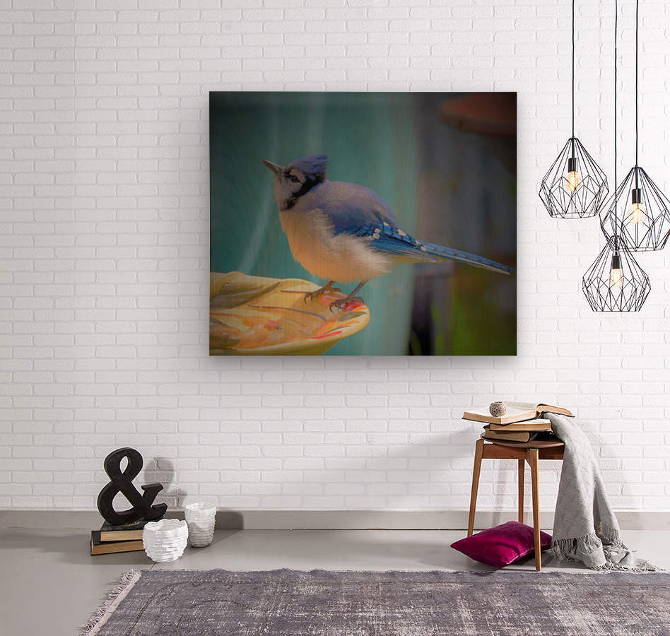 Geai bleu  Wood print