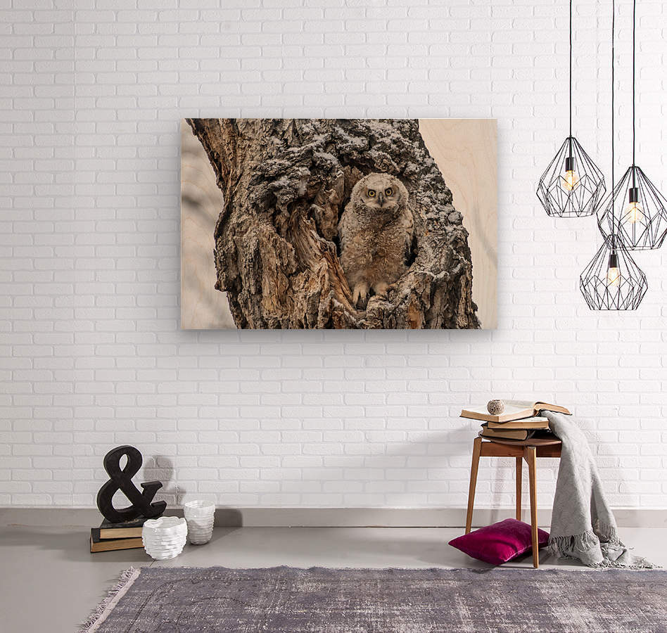 Great Horned Owlet - Can I come out yet  Wood print