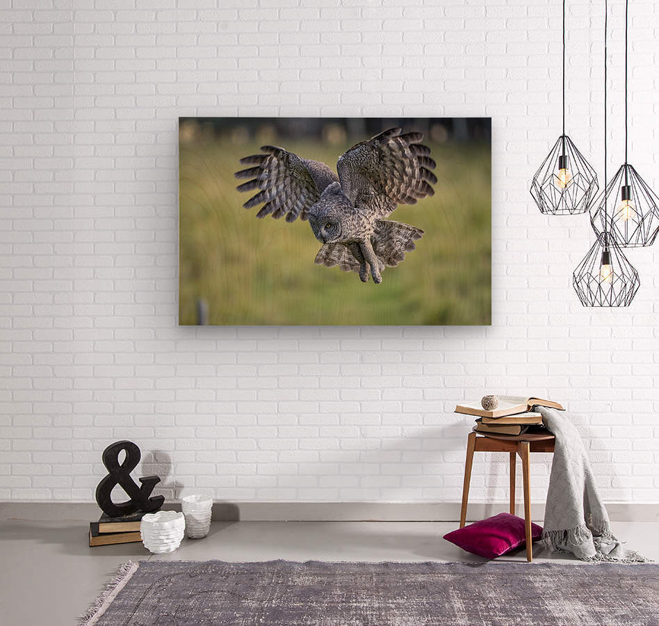 Great Grey Owl - Incoming  Wood print