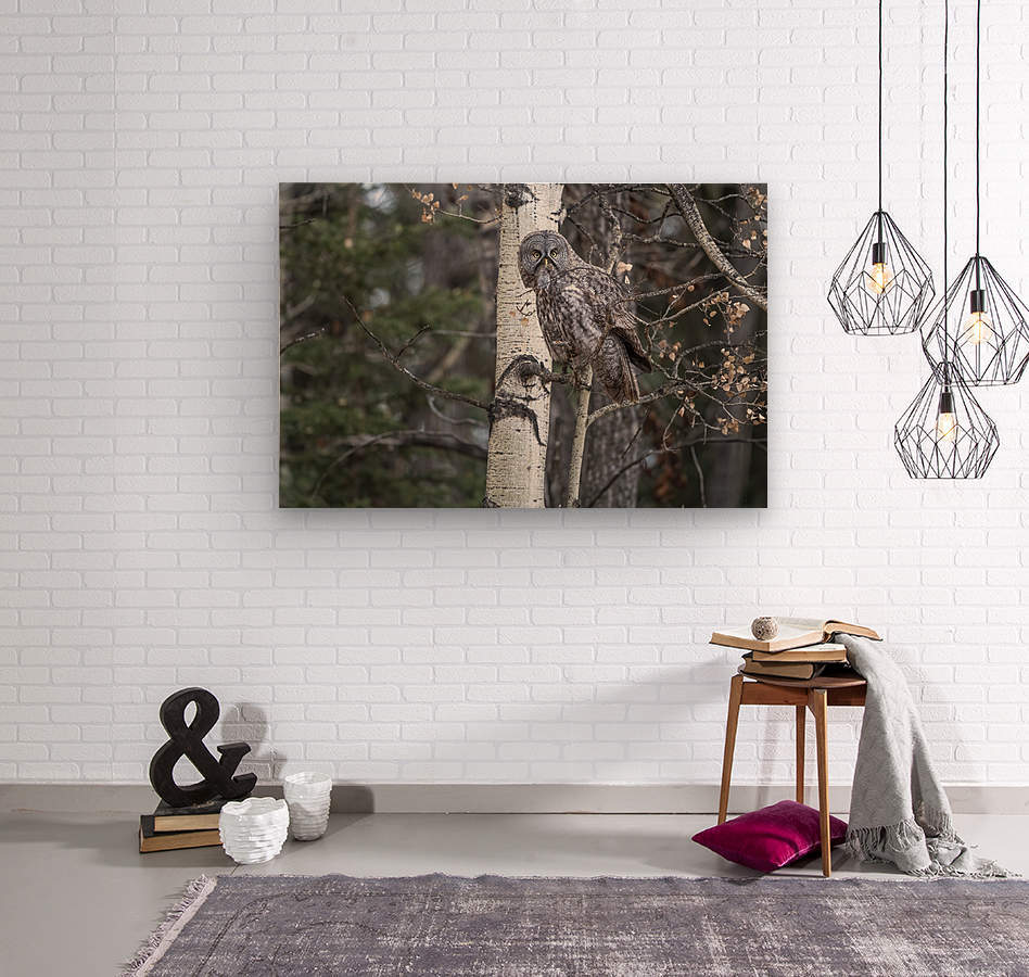 Great Grey Owl - Its Just a Snack  Wood print