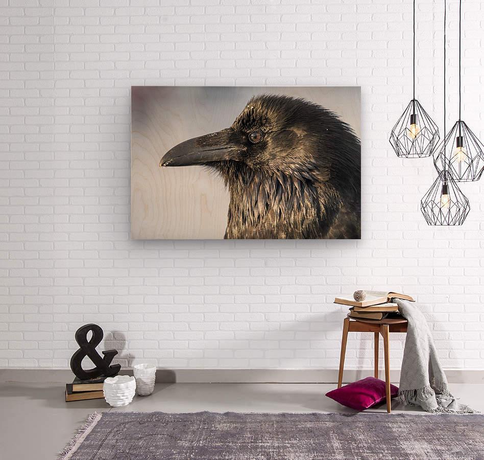 Raven - Up Close  Wood print