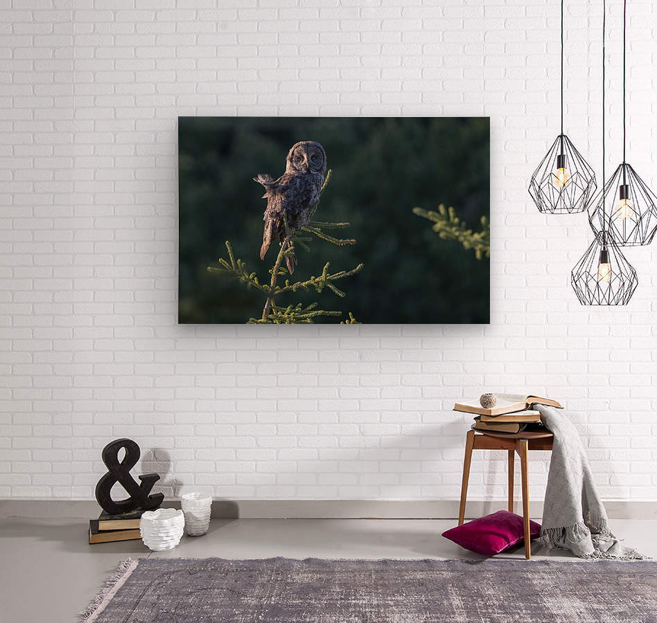 Great Grey Owl - Tree Top Hunting  Wood print