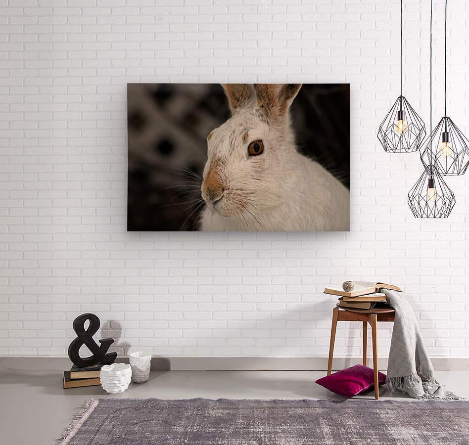 Mr Rabbit  Wood print