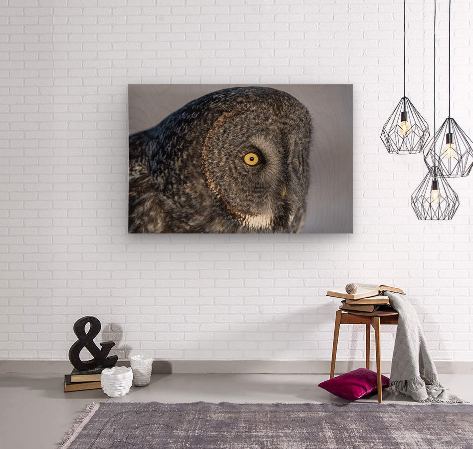 Great Grey Owl up Close  Wood print