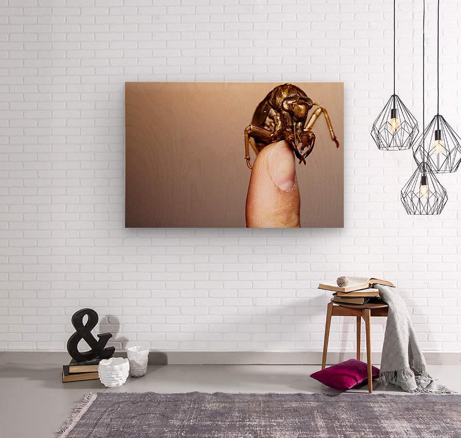 Golden Molt  Wood print