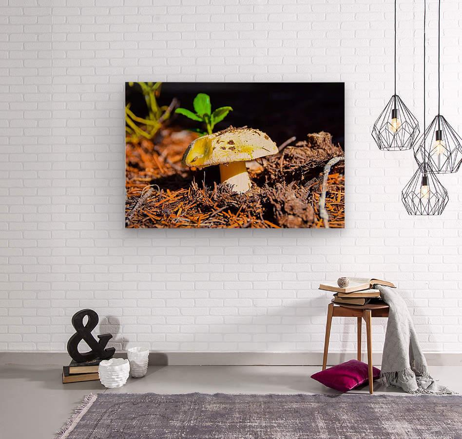 FB_IMG_1551063477421  Wood print
