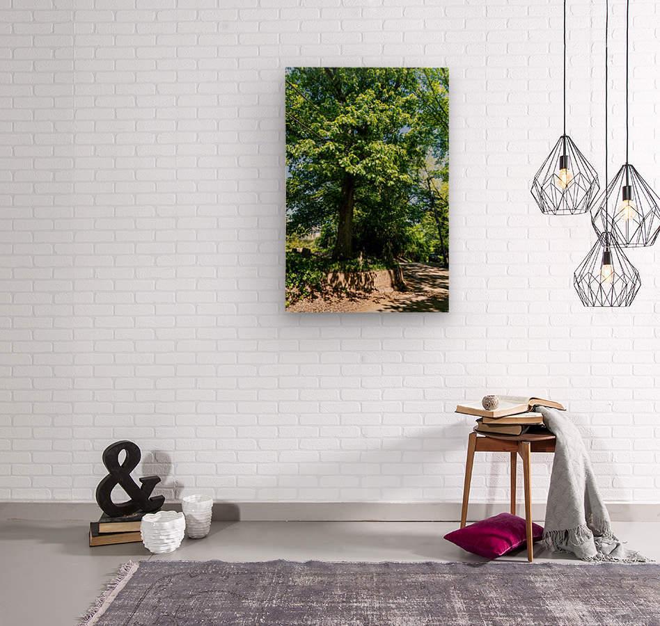 Tree Than Owns Itself   Athens GA 06567  Wood print